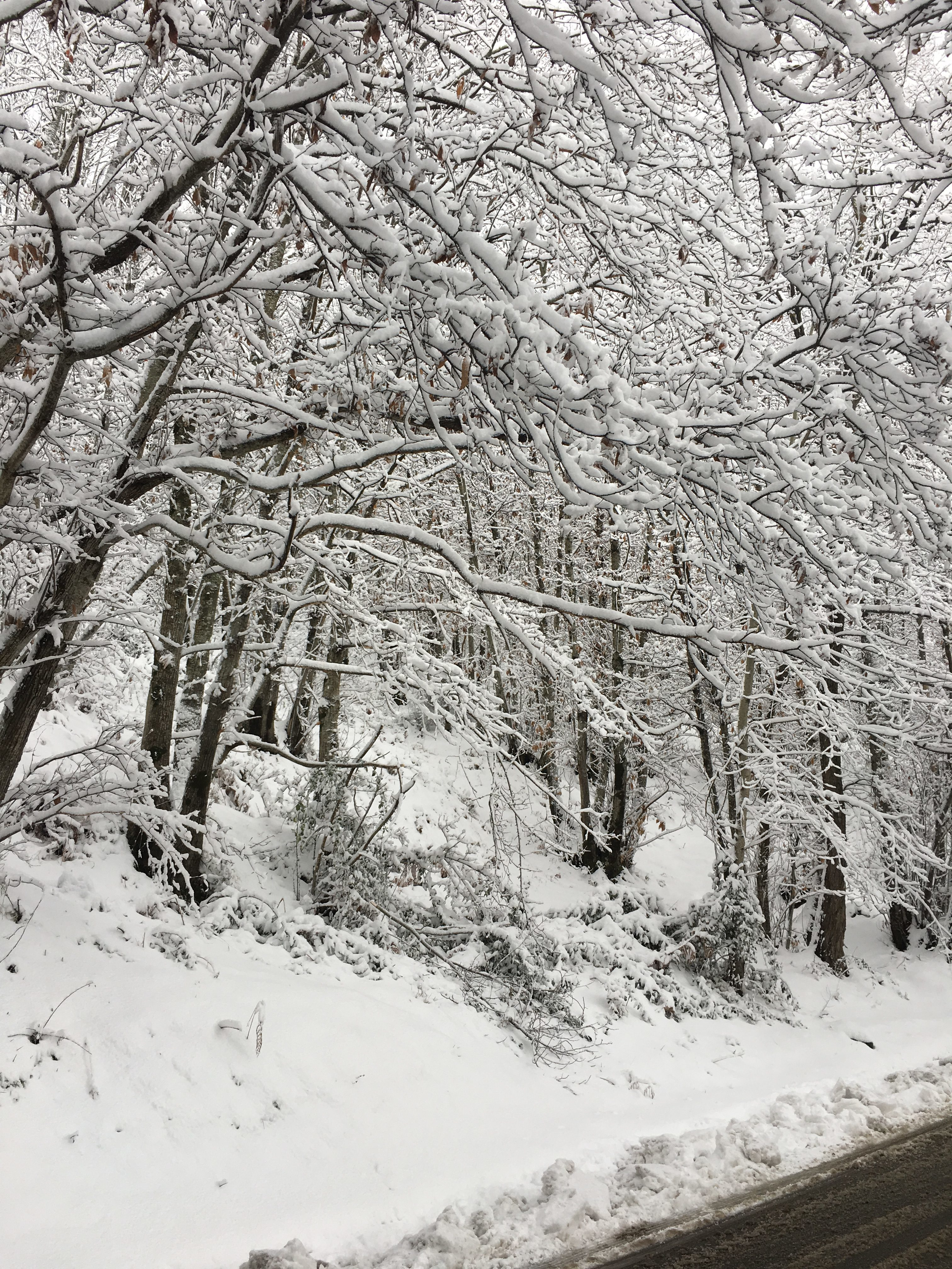 gambarie d'Aspromonte epifania sulla neve